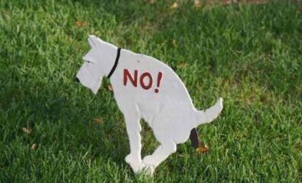Dog no pooping sign on my lawn