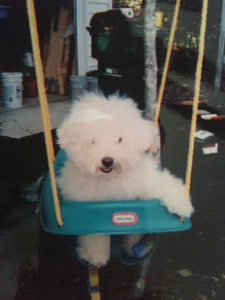 Miss Thang dog in swing