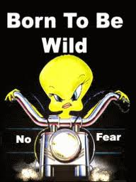 Born to be wild photobucket dot com