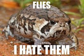 Grumpy  Toad meme pandawhale dot om