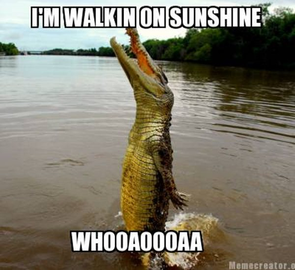 animal memes alligator