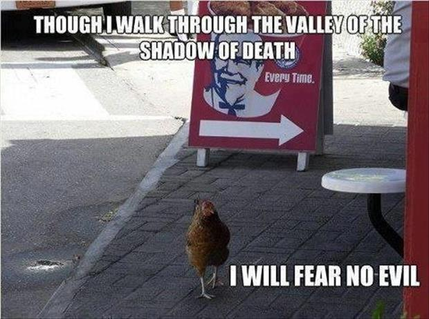 funniest animal fear no evil