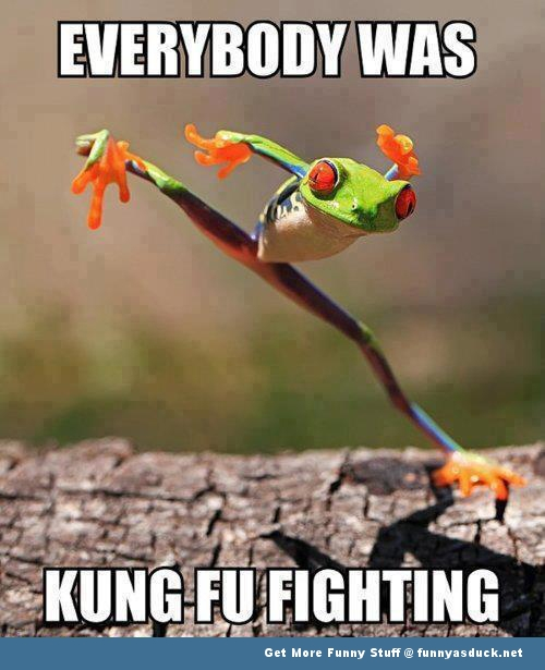Funny Animal Kung Fu Fighting