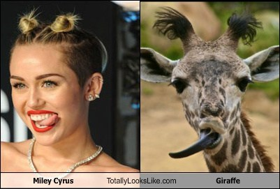 Giraffe Miley look alike