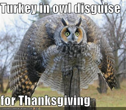 Turkey in Owl disguise cheezburger dot com