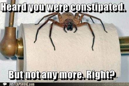 Constipated spider solver END